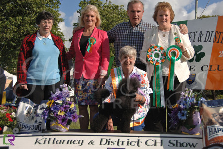 Best in Show - Killarney 2014