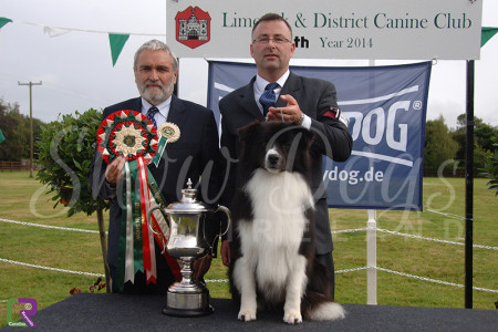 Best in Show - Limerick & District 2014