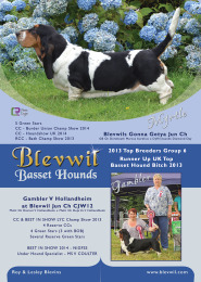 Blevwil Bassets Advert - August 2014