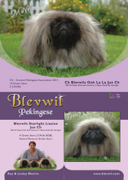 Blevwil Pekingese Advert - August 2014