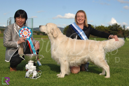 Best in Show - Tralee & District 2014