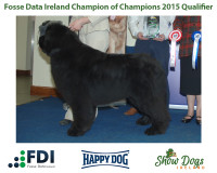Combined Canine National 2015 Qualifier