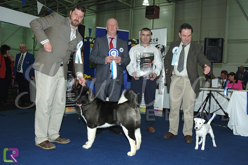combined canine national 2015 � show dogs ireland